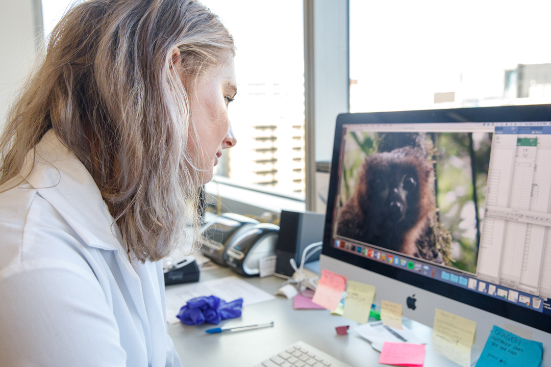 Senior biological anthropology major Thea Anderson uses imaging software to examine the distinctive eyepatches of the red-bellied lemur for her Luther Rice research.