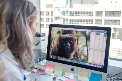 Senior biological anthropology major Thea Anderson uses imaging software to examine the distinctive eyepatches of lemur
